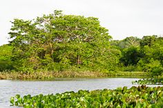 Explore the Amazon by boat with REI.