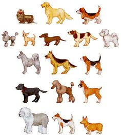 cute dogs for comparison, sequencing, and more. - Re-pinned by #PediaStaff.  Visit http://ht.ly/63sNt for all our pediatric therapy pins