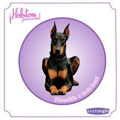 #Hábitosperrunos ¿Tenés un perrito que siempre cuida de ti?