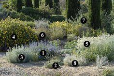 1 : Salvia chamaedryoides 2 : Rhodanthemum hosmariense 3 : Artemisia abrotanum 'Silver' 4 : Phlomis 'Le Sud' 5 : Senecio vira-vira 6 : Salvia fruticosa 7 : Salvia leucophylla 8 : Artemisia lanata