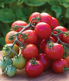 Cherry Punch Hybrid Tomato Seeds and Plants - Vegetable Gardening at Burpee.com