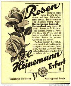 Original-Werbung/Inserat/ Anzeige 1930 - ROSEN / HEINEMANN ERFURT - ca. 65 x 75 mm