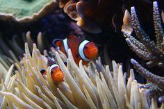 . Aquarium Set, Ocean Creatures, Ocean Life, Pets, Animals, Animals And Pets, Animales, Navy Life, Animaux