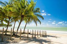 Praia do Marceneiro, em São Miguel dos Milagres, na Rota Ecológica de Alagoas. Saiba mais >> http://www.guiaviagensbrasil.com/blog/rota-ecologica-de-alagoas/