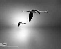 Daybreak by DigitalArtPhotography