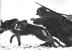 Hundestaffel der Wehrmacht