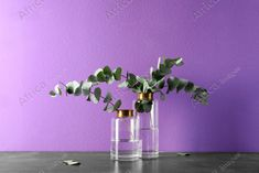 Beautiful eucalyptus branches in glass vases on table against purple background. Buy Creativity & Imagination. Take a look at what the world's best photographers have to offer at africa-images.com Purple Background Images, Purple Backgrounds, Eucalyptus Branches, Best Photographers, Photo Library, Vases, Imagination, Glass Vase, Creativity