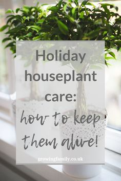 Going on holiday? Check out these houseplant care tips for keeping your indoor plants alive and happy while you're away! Big Indoor Plants, Indoor Flowers, Going On Holiday, Holiday Looks, Flower Pot Design, House Plant Care, Sympathy Flowers, House Plants Decor, Herbs Indoors