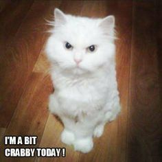 I'm a bit crabby today!
