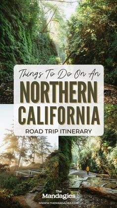 Giant Redwood trees, beautiful coastline, and hidden waterfalls…You can see all of this in one epic Northern California Road Trip! We're including everything from Yosemite, the Redwoods, San Francisco, Shasta, Tahoe and more in our complete itinerary. Save this post for future trip inspiration! #california #notherncalifornia #yosemite #Roadtrip #sanfrancisco #hiking #camping #redwoods #shasta #mountains #travel #USAtravel #usa #photography #sunset #waterfalls California Coast, California Travel, Northern California, Pacific Coast, Pacific Northwest, Travel Ideas, Travel Tips, Lake Shasta, Southern Oregon Coast