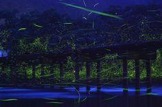 Long exposure photos of Genji botaru fireflies dancing around small bridge (10 pictures)