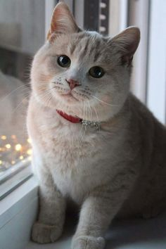 Ohhh!! What a Beautiful Cat. It's Lovely. LOVE Cats SLVH ♥♥♥♥
