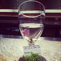 We used #bettafish as #centerpieces at a #sharktank luncheon!