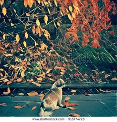 Digital photo of small dog sitting on wooden structure under tree branches with bright colorful autumn leaves scattered on ground. Tree Branches, Small Dogs, Autumn Leaves, Royalty Free Stock Photos, Bright, Colorful, Digital, Board, Illustration