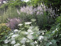 Gardens: The white Ammi majus looks great at the front of the borders. Great to see them grow from a seed to flowering. Gardens: Sow seed early in feb don't cover the seed. Keep in a cool greenhouse to grow on keep moist. Prick out while small. Love Garden, Dream Garden, Plant Design, Garden Design, Vegetable Garden Planning, Deco Floral, Garden Borders, White Gardens, Colorful Garden