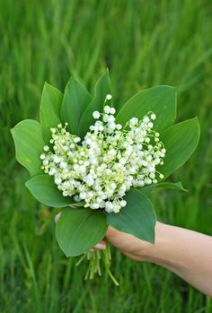 Lily of the valley (convallaria majalis) in hand Beautiful Flower Arrangements, Wild Flowers, Beautiful Flowers, Lily Of The Valley Flowers, Butterfly Bush, Spring Theme, Flower Aesthetic, Flower Pictures, Calla Lily