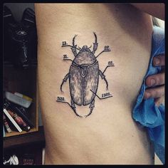 Scientific illustration of a beetle tattoo on the right side ribcage.