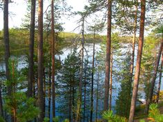 The view from our cottages. Finland, Cottages, Wilderness, Plants, Chalets, French Country Cottage, Cottage, Cabins, Plant