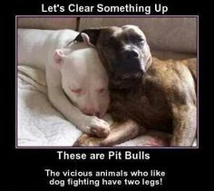 Pitbulls full of love BLAME THE OWNER NOT THE BREED -BLK