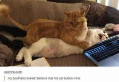 Funny Cat – 50 Pictures