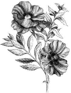 Pen & Ink Illustrations – LA Creates