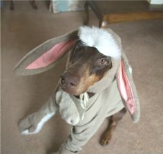 Thanks all who entered the Halloween costume contest! Congrats to Melbrod, her photo of Kip as Eeyore was the clear winner among voters. Cute Puppies, Cute Dogs, Corgi Puppies, Big Dogs, Halloween Costume Contest Winners, Doberman Love, Fete Halloween, Handmade Dog Collars, Nct