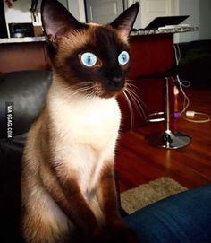 My cat has seen some stuff