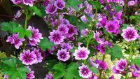 Per fare tutto ci vuole un fiore Ecco i giardini per i più piccoli