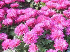 Wisteria, Gardening, Autumn, Gardens, Home, Agriculture, Plant, Life, Fall Season