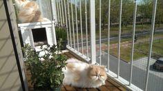 Mijn kattenbalkon #cats #balcony #catproof