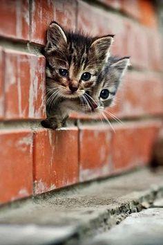 #showmecats #thekittens #kitties