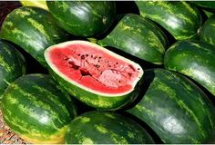 Learn how to plant, grow, and harvest watermelon with this growing guide from The Old Farmer's Almanac. How To Store Watermelon, Sweet Watermelon, Home Vegetable Garden, Fruit Garden, Organic Gardening, Gardening Tips, Gardening Vegetables, Watermelon Pictures, Watermelon Benefits