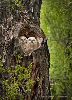 The Heart of Owls
