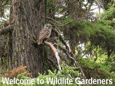 Wildlife Gardeners - North American Wildlife Gardening - Food Forests