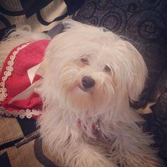 Marilou my baby maltese