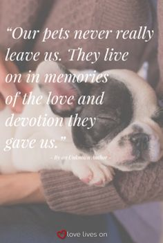 A beautiful sympathy quote for pet loss & expressing pet grief. Pet Sympathy Quotes, Pet Quotes Cat, Sympathy Card Sayings, Pet Loss Quotes, Animal Quotes, Pet Memes, Sympathy Gifts, Losing A Pet Quotes, Losing A Dog