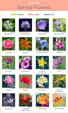Flowers can be picky about when they grow. Learn which flowers thrive in which season with our seasonal flower guide. Spring Flowers Names, Flower Names, Summer Flowers, Beautiful Flowers, Flowers Perennials, Planting Flowers, Perrenial Flowers, Flower Garden Plans, Seasonal Flowers