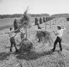 This reminds me my grandfathers farm, we made this every summer when I was child History Of Finland, Nostalgia, Powerful Pictures, Good Old Times, Vintage Farm, Gone With The Wind, Aviation Art, Life Photo, Ancient History