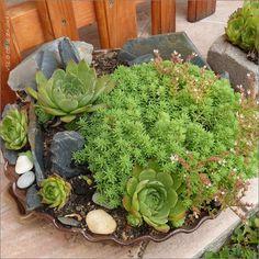 Vše o co se zajímám: Květena a popis Cabbage, Succulents, Vegetables, Plants, Cabbages, Succulent Plants, Vegetable Recipes, Plant, Brussels Sprouts