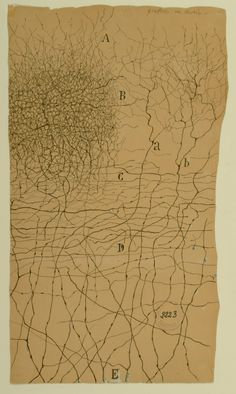 Santiago Ramón y Cajal, Drawings of Neuron Ramones, Scientific Drawing, Neurone, Neuroscience, Psych, Printmaking, Roots, Barcelona, Watercolor