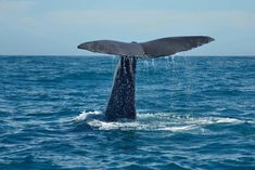 Whale watching cruise. Sperm whales year round. New Zealand.
