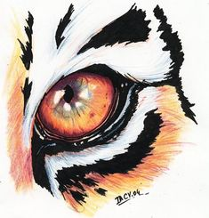 Animal Sketches, Animal Drawings, Art Sketches, Art Drawings, Tiger Drawing, Tiger Art, Painting & Drawing, Image Tigre, Tiger Eyes Tattoo