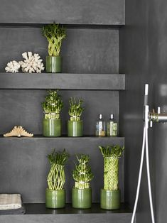 Lembre-se: o número de hastes do bambu da sorte influencia no significado místico da planta Home Decor Trends, Indoor Trees, Decorating Tips, Bamboo, Decor, Different Plants, White Vases, Trending Decor, Small Greenhouse Design