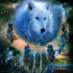 Indian Wolf, Wolf Stuff, Wolf Wallpaper, Wolf Spirit, Beautiful Wolves, Werewolf, Wildlife, Dream Catchers, Black Wolves