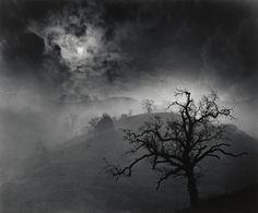 Wynn Bullock. Stark Tree. 1956
