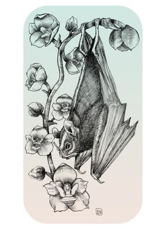 Bat Orchid by Owlish