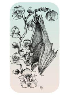 Bat Orchid by Owlish