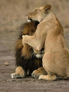 Every King needs a Queen.