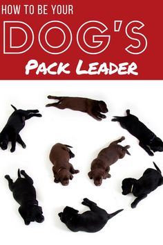 3 Easy Steps to Be The Dog Pack Leader