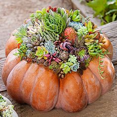 I made one of these Succulent Pumpkin Centerpieces today with a group of friends. A fun day and a fun project...Thanks, Bev!!